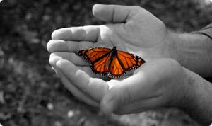 transgender butterfly